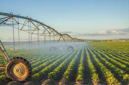 改革大局和价格市场化元年之下蜡质玉米淀粉寒梅粉继续承压