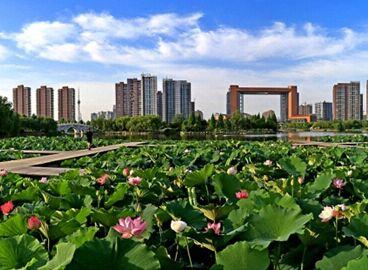 临沂市冬季生产管理成本上升导致寒梅粉、蜡质玉米淀粉上涨